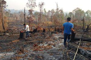 Làm giàu từ rừng là tự hủy diệt