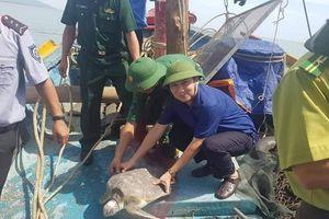 Hà Tĩnh: Thả cá thể rùa quý hiếm nặng 18kg về biển