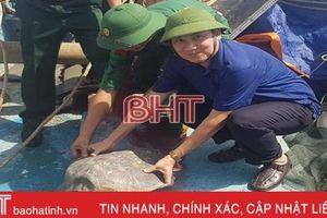 Thả rùa biển quý hiếm nặng gần 20 kg về môi trường tự nhiên
