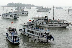 Thuyền viên quay lén du khách đang tắm tráng, tàu du lịch vịnh Hạ Long bị đình chỉ