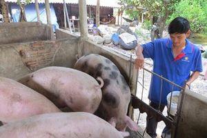 Đang tăng mạnh, giá lợn bỗng chững lại, rớt giá thê thảm ở miền Nam
