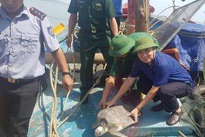 Hà Tĩnh: Thả rùa biển quý hiếm về môi trường biển