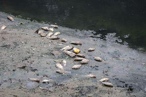 Chuyên gia lý giải nguyên nhân cá chết hàng loạt ở sông Tô Lịch
