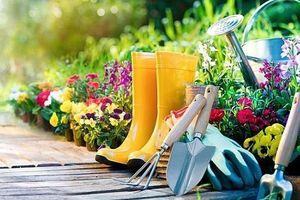 Thúc đẩy ứng dụng công nghệ thông minh 4.0 trong lĩnh vực làm vườn
