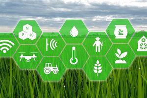 Ứng dụng trí tuệ nhận tạo trong nông nghiệp liệu có khả thi?