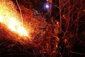 3 nông dân đốt ong làm cháy rừng bị khởi tố