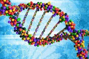 Choáng với khám phá về bộ gen người Việt từ trước tới nay
