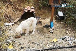 Clip: Chú chó trung thành chờ chủ ở nơi xảy ra tai nạn suốt 18 tháng