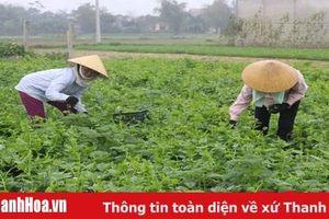 Tích tụ được 35.612 ha để sản xuất cánh đồng mẫu lớn