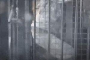 Bị sư tử tấn công, nhân viên vườn thú thoát chết trong gang tấc