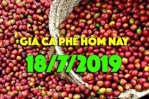Giá cà phê hôm nay 18/7: Tăng thêm 400 đồng, đạt ngưỡng 34.000 đồng/kg
