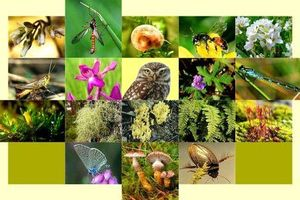 Lập Hội đồng thẩm định Nhiệm vụ lập Quy hoạch bảo tồn đa dạng sinh học quốc gia
