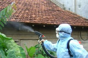 Bộ Y tế mở chiến dịch diệt lăng quăng, bọ gậy quy mô lớn