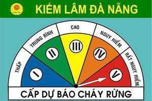 Đà Nẵng: Từ 19/7 – 24/7, nguy cơ cháy rừng lên đến cấp 'Rất nguy hiểm'