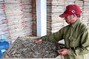 Tồn 750 tấn cá hấp phơi khô do thương lái Trung Quốc dừng thu mua