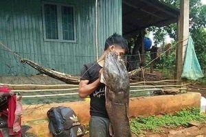 Clip: Dân câu được cá leo 'khủng' nặng hơn 80kg, dài gần 2m trên sông Krông Ana
