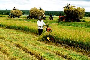 Hợp tác xã nông nghiệp: Không thể 'bình mới rượu cũ'