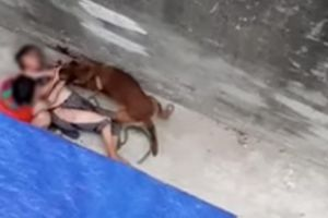 Bà ngoại bị chó cắn trọng thương: Ám ảnh chó nuôi cắn người