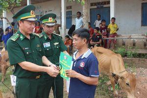Trao tặng bò giống giúp người nghèo biên giới