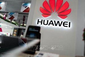 CEO các công ty công nghệ Mỹ ủng hộ hạn chế sử dụng các sản phẩm của Huawei
