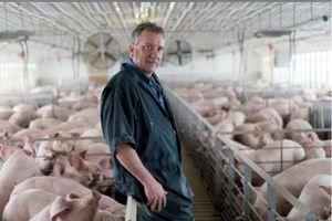 Người chăn nuôi Mỹ tận dụng 'cơ hội' từ thị trường thịt lợn Trung Quốc