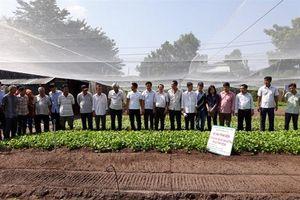 Gieo hạt rau bằng máy lãi hơn 7,5 triệu đồng/ha/vụ so với gieo tay