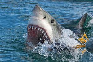Câu được 'quái thú' cá mập cực khỏe, ngư dân gặp điều kinh dị