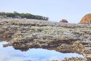 Cấp thiết bảo vệ hệ sinh thái vùng biển ven bờ