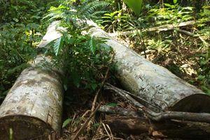 Phá rừng lấy đất ở Ea Kar: 'Cò' xưng là đệ tử lãnh đạo Công ty lâm nghiệp Ea Kar để bán đất