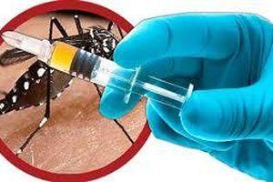 Việt Nam hoàn thành nghiên cứu vắc - xin sốt xuất huyết