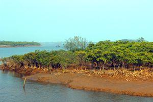 Rừng ngập mặn ven biển Đồng Rui