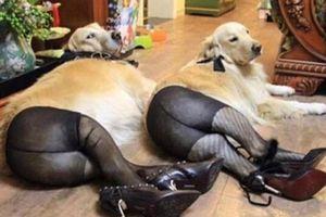 Biểu cảm 'khó đỡ' của động vật làm bạn cười 'mỏi mồm'
