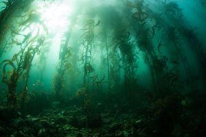 Phát hiện khu rừng nghìn năm tuổi ẩn dưới đáy biển
