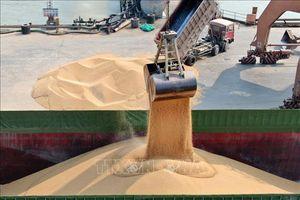 Trung Quốc sẽ tăng cường mua các nông sản xuất khẩu của Mỹ