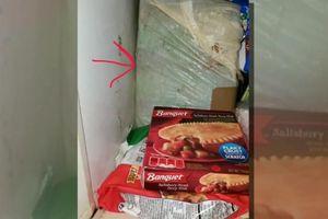Mở tủ lạnh của mẹ, choáng váng phát hiện thi thể trẻ sơ sinh