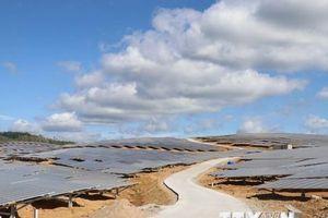 Tháng 9, Bộ Công Thương sẽ trình Chính phủ kịch bản giá điện Mặt Trời