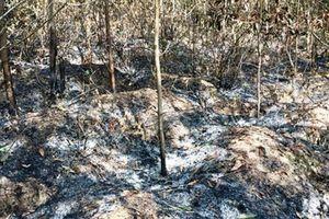 Nam thanh niên ở Nghệ An 3 lần đốt rừng chỉ để trả thù, cho vui