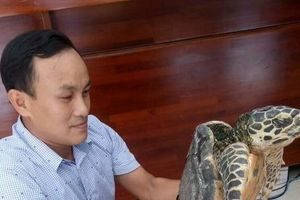 Tắm biển Đồ Sơn, du khách bắt được loại đồi mồi quý hiếm nặng 14,5kg