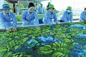 Để doanh nghiệp nông nghiệp làm chủ biển lớn