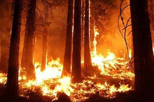 Trong vòng một ngày ở Nga dập được 22 đám cháy rừng