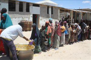 Tân Tổng Giám đốc FAO thúc đẩy mục tiêu 'Không còn nạn đói'