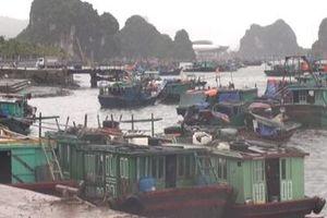 Bão tan, tàu du lịch hoạt động trở lại trên Vịnh Hạ Long