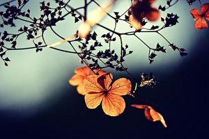 Suy ngẫm về ý nghĩa của 8 điều dễ - khó trong cuộc đời