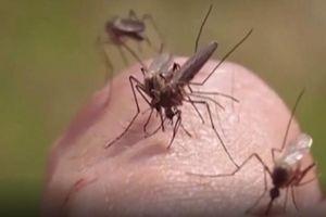Mỹ: Ghi nhận những ca nhiễm virus Tây sông Nile đầu tiên ở người
