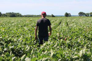 Trung Quốc trả đũa Tổng thống Trump, nông dân Mỹ lao đao