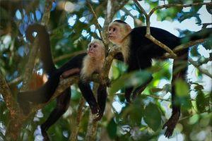Chuyện kỳ lạ có thật về bé gái được đàn khỉ nuôi dưỡng