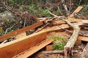 Yêu cầu khẩn trương khởi tố vụ án phá rừng đầu nguồn ở Quảng Nam