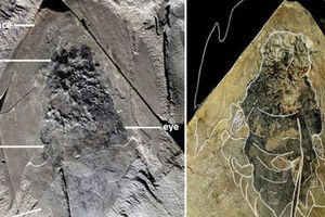 Quái vật 506 triệu tuổi trong mỏ đá y hệt tàu vũ trụ