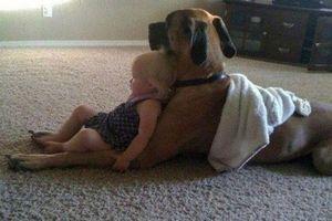 Hình ảnh ngộ nghĩnh và siêu đáng yêu về những chú chó