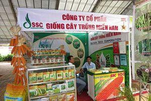 Áp lực từ sự phình to các khoản phải thu của Giống cây trồng miền Nam (SSC)